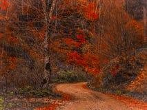 Percorso nella foresta con i colori di caduta immagine stock libera da diritti