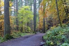 Percorso nella foresta dell'eremo, Scozia Immagini Stock