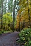 Percorso nella foresta dell'eremo, Scozia Immagine Stock Libera da Diritti