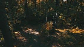 Percorso nella foresta di autunno stock footage