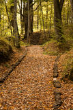 Percorso nella foresta/legno Fotografie Stock