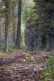 Percorso nella foresta, montagne di Altai Immagini Stock