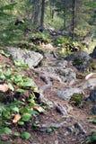 Percorso nella foresta, montagne di Altai, Russia Fotografia Stock