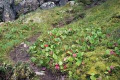 Percorso nella foresta, montagne di Altai, Russia Fotografia Stock Libera da Diritti