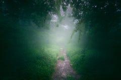 Percorso nella foresta nebbiosa fotografia stock