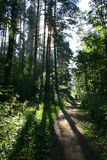 Percorso nella foresta (proprietà terriera Mihailovskoe) fotografie stock