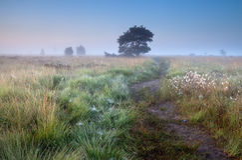 Percorso nella mattina nebbiosa di estate Fotografia Stock Libera da Diritti