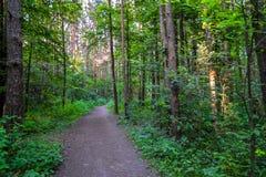 Percorso nelle alte latifoglie della foresta Estate La Russia Fotografie Stock