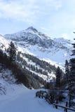 Percorso nevoso invernale con gli alberi e montagna in montagne delle alpi di Stubai Immagini Stock Libere da Diritti