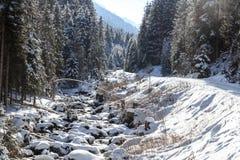 Percorso nevoso invernale con gli alberi e piccolo fiume in montagne delle alpi di Stubai Fotografie Stock