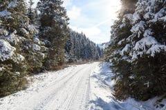 Percorso nevoso invernale con gli alberi in montagne delle alpi di Stubai Fotografie Stock Libere da Diritti
