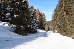 Percorso nevoso invernale con gli alberi in montagne delle alpi di Stubai Immagine Stock Libera da Diritti