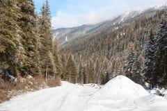 Percorso nevoso invernale con gli alberi in montagne delle alpi di Stubai Immagine Stock
