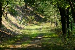 Percorso o traccia di foresta della montagna Immagini Stock Libere da Diritti