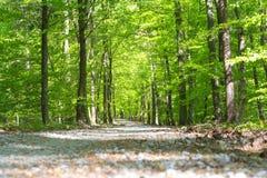 Percorso in più forrest nel tempo di primavera con le foglie verdi dall'angelo basso Fotografia Stock