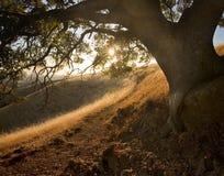 Percorso pieno di sole sotto la quercia sul pendio di collina idillico Immagini Stock