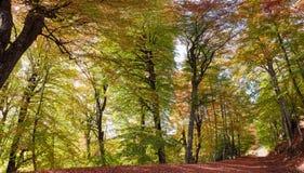 Percorso pittoresco di autunno Fotografia Stock Libera da Diritti