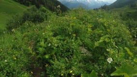Percorso in prati alpini stock footage