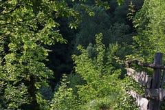 Percorso in primavera nelle montagne della Romania Immagini Stock