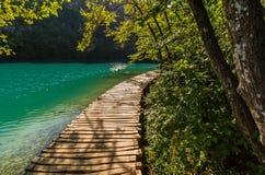 Percorso profondo della corrente della foresta con acqua cristallina nel sole Laghi Plitvice, Croatia fotografie stock libere da diritti