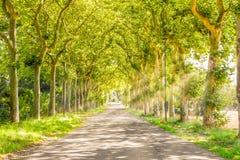 Percorso rurale con gli alberi ed i raggi luminosi fotografia stock libera da diritti