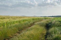 Percorso rurale verde fotografia stock libera da diritti