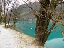 percorso sabbioso lungo il lago con molti alberi immagini stock