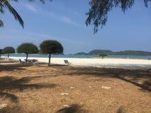 Percorso sabbioso su una spiaggia in sole caldo con la palma Immagine Stock