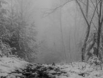 Percorso scuro in una foresta nebbiosa fotografia stock