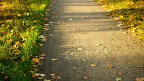 Percorso soleggiato nel parco, foglie gialle, erba verde di autunno Fuoco selettivo Fotografie Stock Libere da Diritti