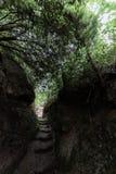 Percorso stretto fra le rocce e gli alberi in Pale Umbria, Italia fotografia stock