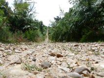 Percorso su una passeggiata della foresta Fotografie Stock Libere da Diritti
