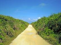Percorso tropicale Fotografia Stock