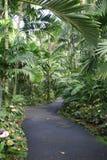 Percorso tropicale del giardino Immagini Stock