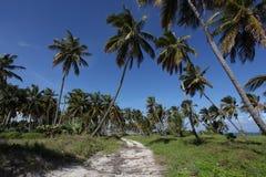 Percorso tropicale della spiaggia Fotografia Stock