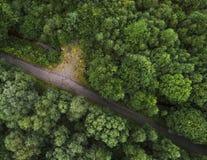 Percorso in una bella foresta verde Fotografia Stock
