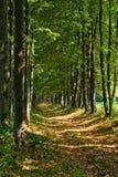 Percorso in una foresta fotografia stock