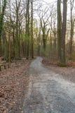 Percorso in una foresta asciutta al tramonto fotografia stock
