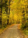 Percorso in una foresta in autunno - Baviera Fotografie Stock Libere da Diritti