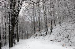 Percorso in una foresta del faggio di Snowy Immagine Stock
