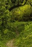 Percorso in una foresta della molla in una luce del giorno Immagini Stock Libere da Diritti