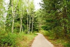 Percorso in una foresta della primavera Immagini Stock Libere da Diritti