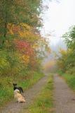 Percorso in una foresta di autunno Fotografie Stock Libere da Diritti