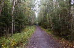 Percorso in una foresta di estate Fotografie Stock Libere da Diritti