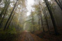 Percorso in una foresta scura di autunno con nebbia Immagine Stock