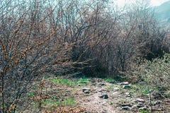 Percorso verde sui precedenti degli alberi fotografia stock libera da diritti