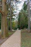 Percorso vuoto in bello parco Paesaggio del giardino Fondo del parco della primavera Vicolo e viale vuoti fra gli alberi ed il le Immagine Stock