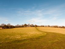 percorso vuoto normale aperto massiccio del cielo blu dell'Inghilterra di agricoltura dell'erba del campo dell'azienda agricola g Fotografia Stock Libera da Diritti
