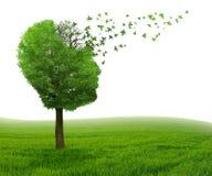 Perda de memória da doença de cérebro devido à doença de Alzheimer da demência fotografia de stock royalty free