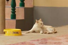 Perda do gato de apetite imagem de stock